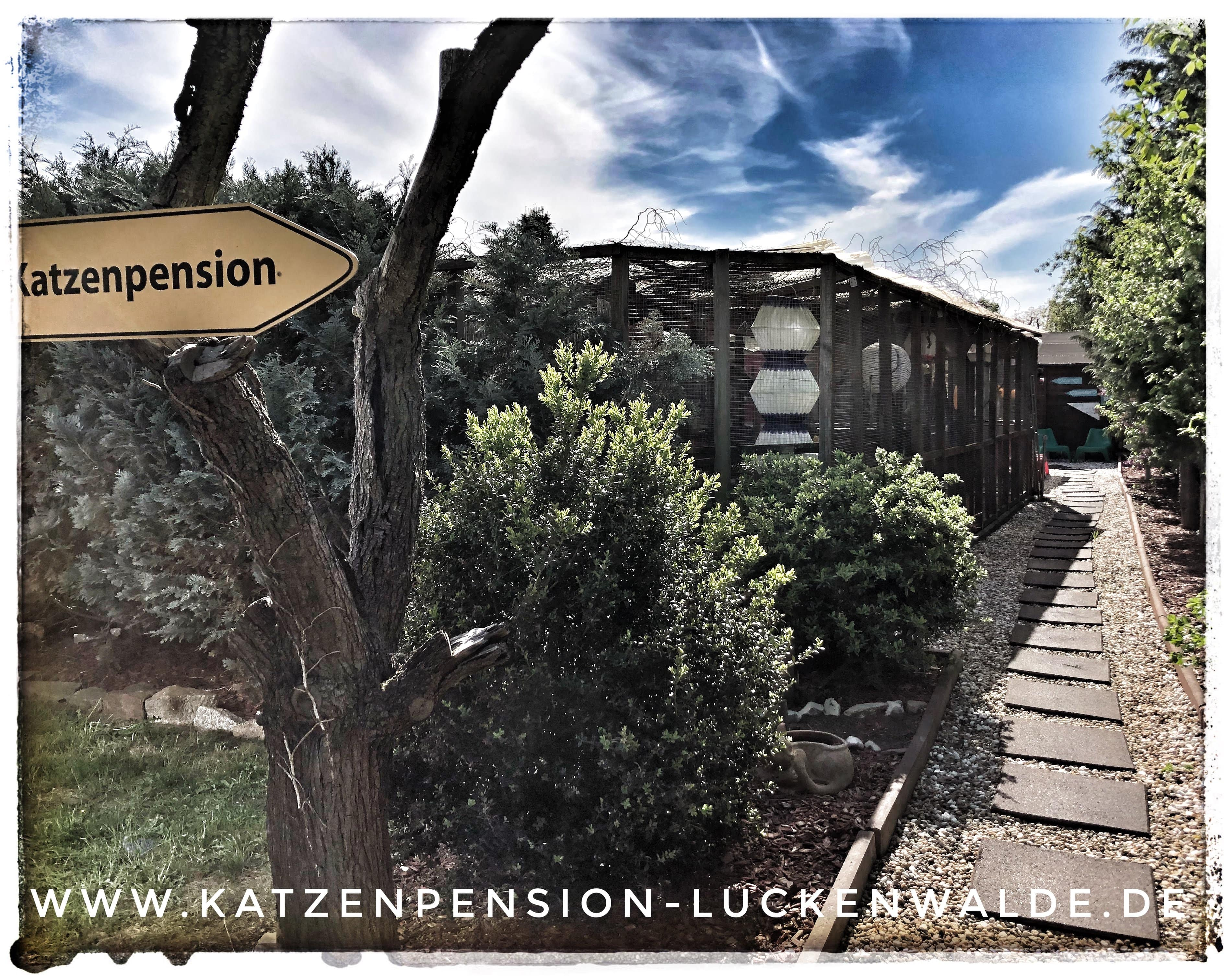 ####h1### - IMG 9530 min - Katzenpension - Tierpension - Tierbetreuung