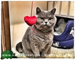 ####h1### - IMG 6605 min - Katzenpension - Tierpension - Tierbetreuung