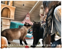 ####h1### - IMG 7566 min - Katzenpension - Tierpension - Tierbetreuung