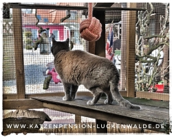 ####h1### - IMG 8315 min - Katzenpension - Tierpension - Tierbetreuung