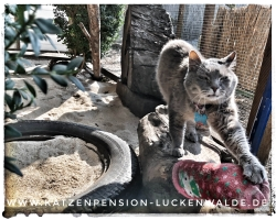 ####h1### - IMG 8374 min - Katzenpension - Tierpension - Tierbetreuung