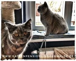 ####h1### - IMG 8745 min - Katzenpension - Tierpension - Tierbetreuung