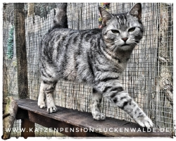 ####h1### - IMG 8854 min - Katzenpension - Tierpension - Tierbetreuung