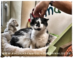 ####h1### - IMG 8990 min - Katzenpension - Tierpension - Tierbetreuung